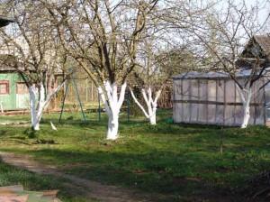 Противники и сторонники побелки деревьев