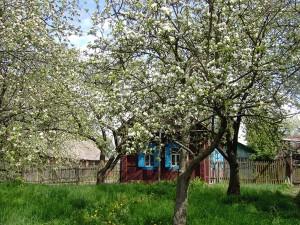 Удобрение весеннего сада