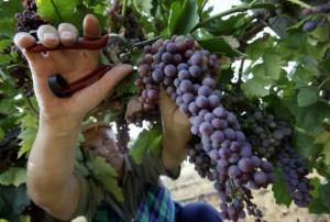 Новинки садоводства в Алматинской области