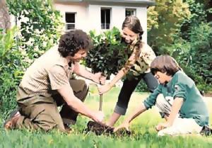 Дела осенние. Плодовые деревья и кустарники