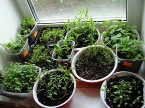 Посев семян на рассаду, пикировка и уход