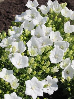 Комнатной цветок с белыми цветками с фото