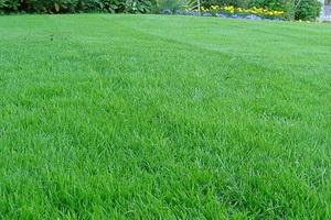 Стрижка газонной травы весной и осенью