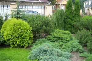 Декоративные хвойные деревья и кустарники