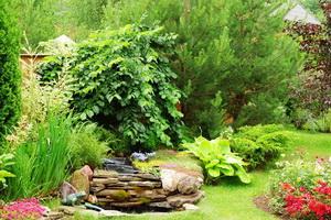 Каталог лиственных кустарников для сада