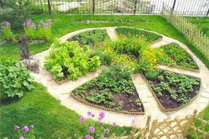 Пряные травы для огорода и дачи