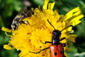 Жуки-вредители растений в саду и огороде