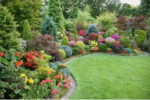 Декоративные деревья и кустарники для дачи
