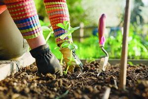 Работа в саду и на огороде в мае: посадка культур и уход за растениями