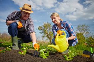 Работа в саду и на огороде в июне