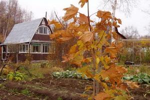 Осенние работы на даче в сентябре: уход за садом и огородом