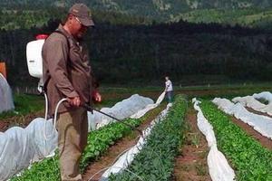 Борьба с вредителями сада огорода в июле