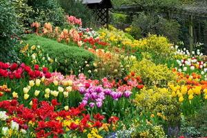 Разноцветный сад: лучшие сочетания цветов на клумбе
