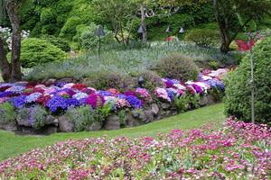 Цветочные коллекции в саду