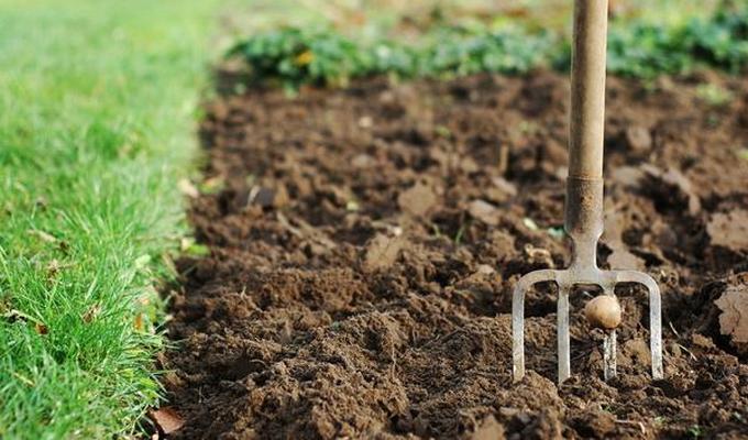 Посадка газонной травы своими руками осенью 90