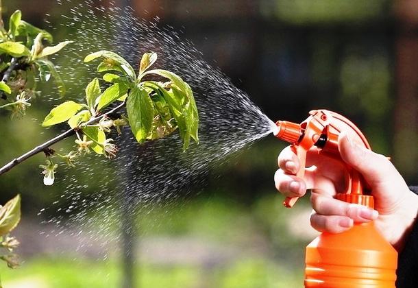 Защита сада от вредителей и болезней эффективными методами